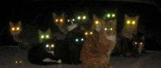 Много глаз в темноте