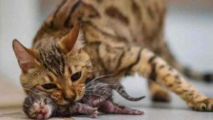 Кошка бросила котят