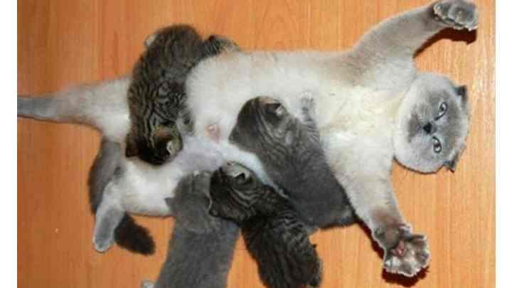 Смешная поза кошки