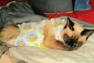 Причины голодания кошки после стерилизации и что делать?