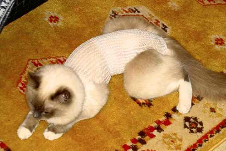 Что можно есть кошке после операции?