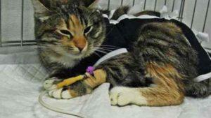 Кошка с капельницей