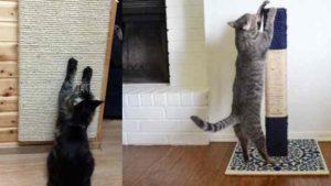 Как сделать когтеточку для кота и кошки