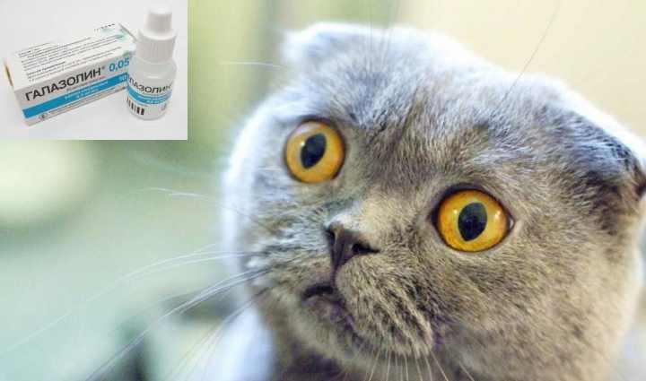 Бактерии и грибковые тела могут быть возбудителями насморка у кошек