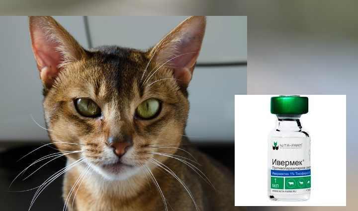 Ивермек для кошек - инструкция, показания к применению