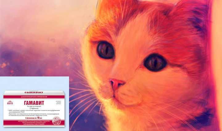 Гамавит для кошек: назначение и инструкция по применению