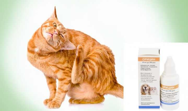 Кошка чешет ушко