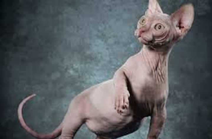 Ассоциацией любителей кошек