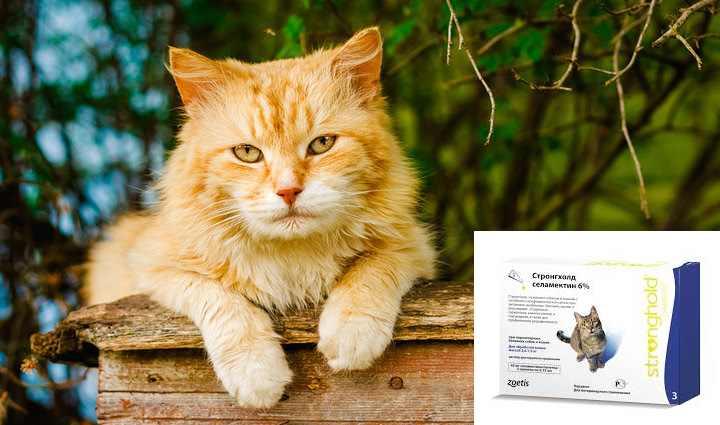 Кошка будет противиться любым манипуляциям