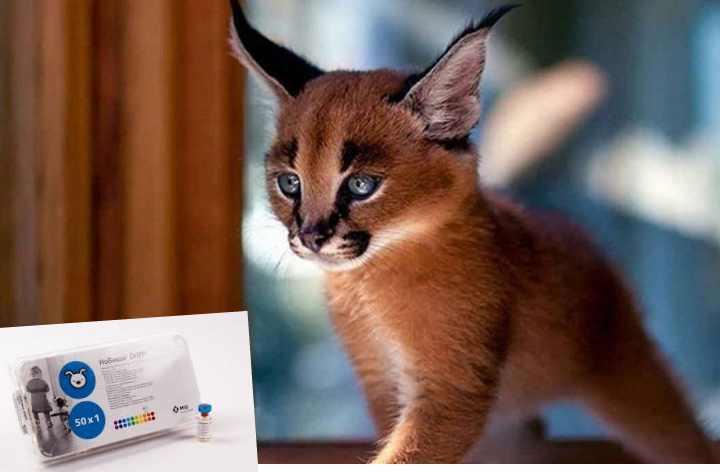 Кроме Трикэт трио, нобивак для кошек бывает следующих видов
