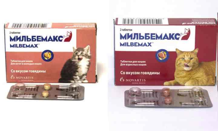 для котят дозировкой 10 и 4 мг