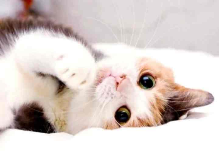 Продолжительность жизни кошки после стерилизации