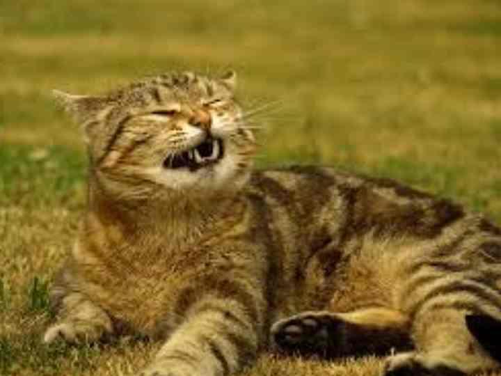 Болезни зубов и ротовой полости