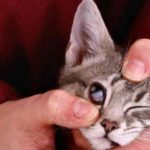 Болезни глаза, при которых ослабевают мышцы;
