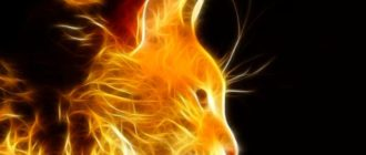 Огненный кот