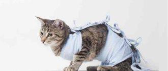 Травмирование или инфицирование кошки, вследствие чего гибнет потомство и дальнейшая родовая функция принесёт только проблемы.