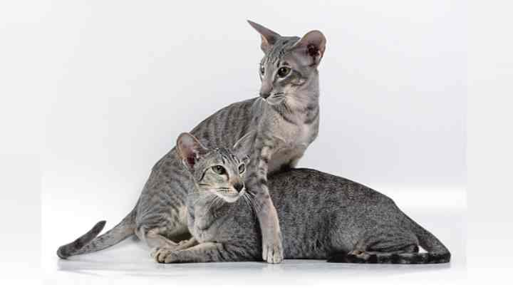 инопланетяне кошачьего мира выглядят именно так