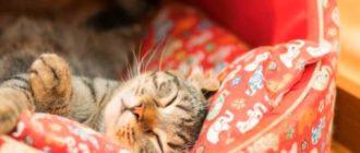Дремота: кошка не теряет никакой бдительности