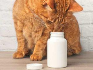 протеин может фигурировать в составе корма для кошек