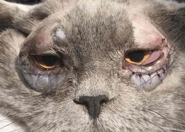 Данное заболевание глаз у кошки чаще всего случается в раннем возрасте