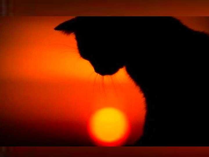 В Англии и Шотландии чёрная кошка это символ женской удачи.
