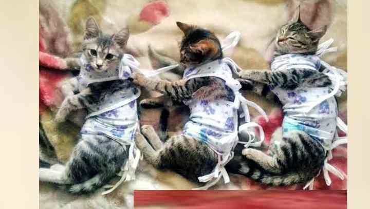 Требуется прервать беременность, которая угрожает жизни кошки;