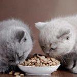 Но самый главный среди них, конечно же, вопрос питания для котёнка.
