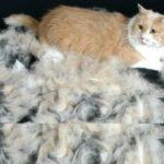 помните, что даже после стрижки в салоне или дома, шерсть будет нуждаться в расчёсывании