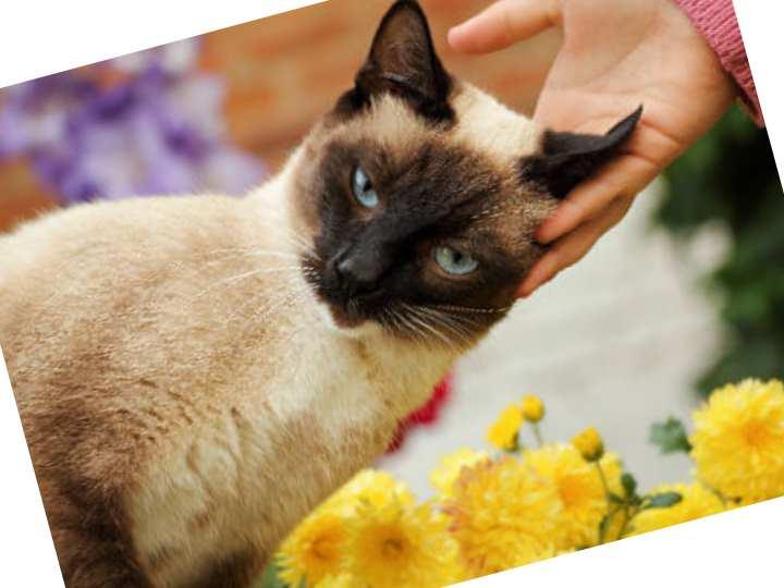 Джон Брэдшоу, автор бестселлера «Тайная жизнь кошки»,
