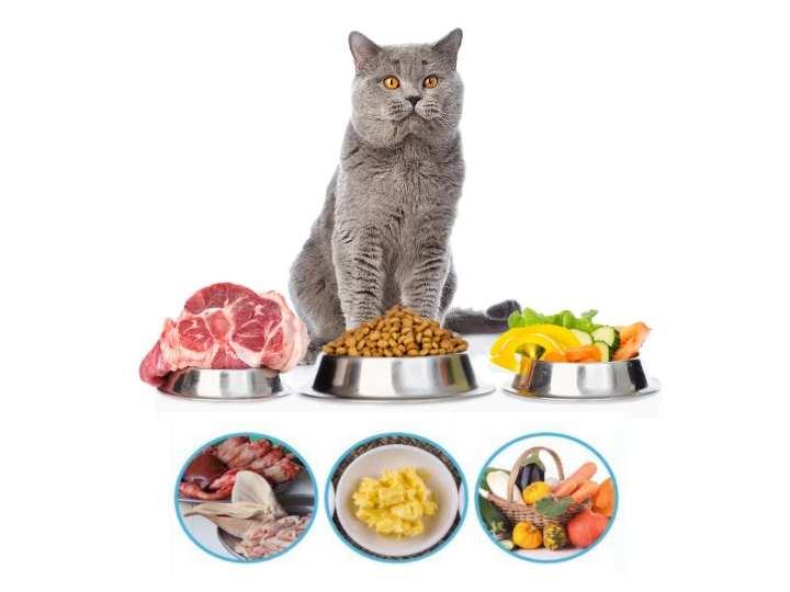 + Вы сами контролируете качество и свежесть продуктов, всегда уверены какие продукты кушает ваш котик.