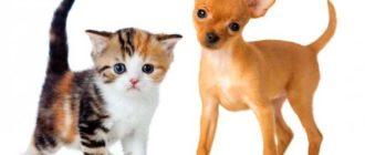 Выгуливать кошек и собак требуется не столько для оправления нужды