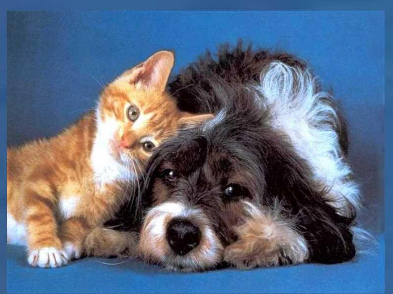 Пушных и длинношерстных собак и кошек чешут раз в 2-3 дня