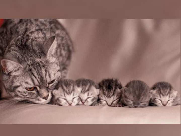 хорошеньких здоровых котят разбирают практически сразу