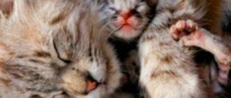 Передержка или «кошачья нянька»