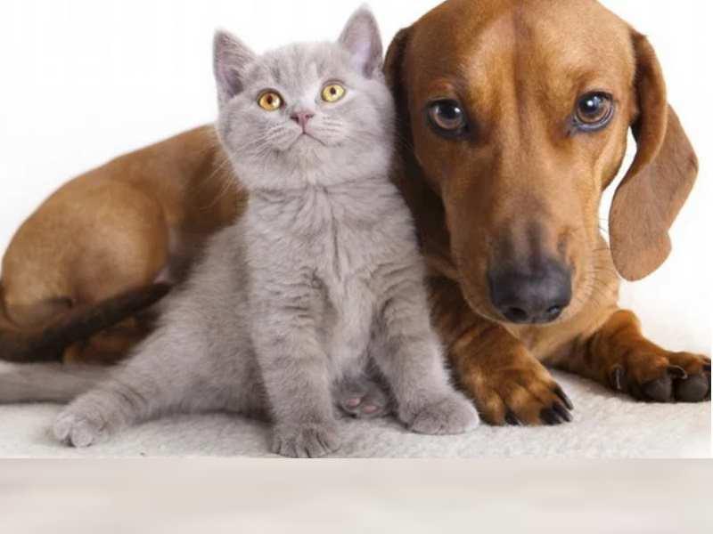Даже собаки, которые живут во дворе частных домов требуют выгула за территорией