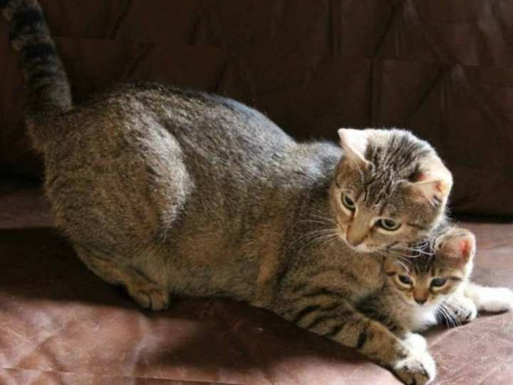 Определить возраст котёнка можно по состоянию глаз
