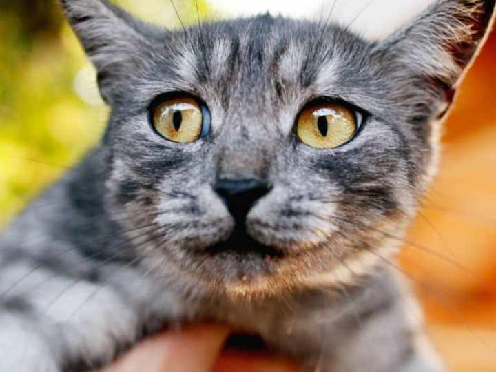 Часто кошки начинают пускать слюни от удовольствия