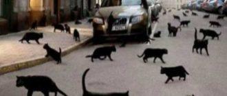 Связь поведения кошки и жизненных обстоятельств человека.