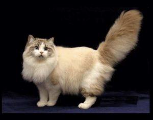 Гены беспородных кошек отразились не только на разнообразии окрасов породы