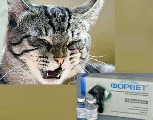 Хронический насморк при слабом иммунитете