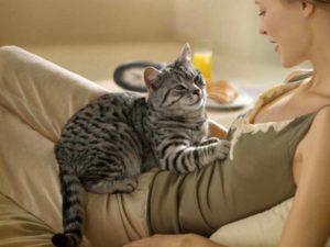 1 - Врождённый инстинкт котят