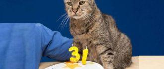 31 год котику