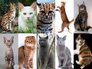 Относительно небольшие финансовые вложения на этапе приобретения пары кошек, либо самки