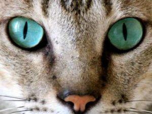 Большие глаза овальной формы