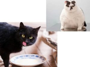 Домашний же котик имеет шанс быть накормленным молоком