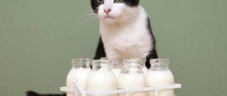 Проблем и вопросов у кошек с молоком не возникает