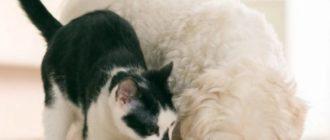 Собачий корм свежее того, что предложен в конкретный момент кошке.