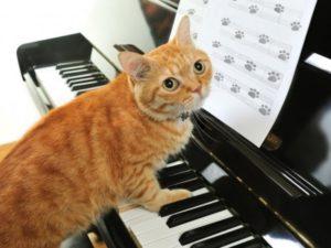 Общие наблюдения за реакцией кошек и котов на «человеческую» музыку