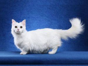 Как часто, смотря на кошку, вы легко называете её породу?