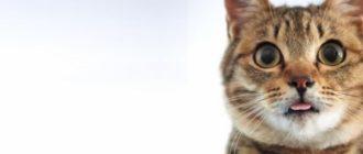 лая кошка в жару или после активных игр и дел может